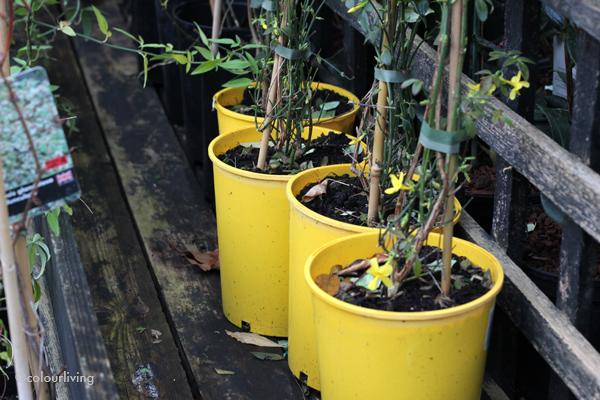 Growing Concerns Garden Centre   Colourliving
