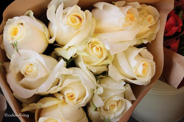 Igloo Flowers - Colourliving