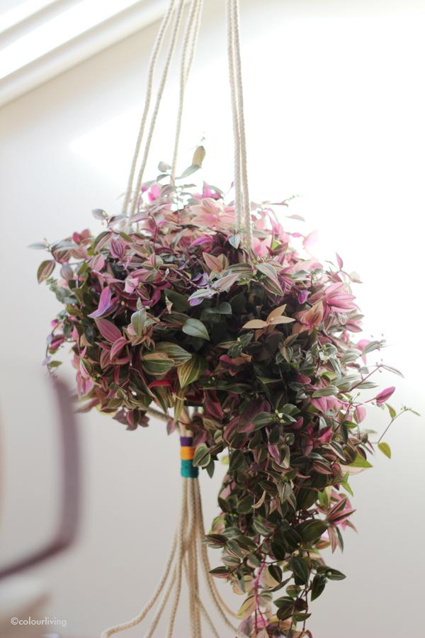 urban jungle bloggers - hanging planters - colourliving