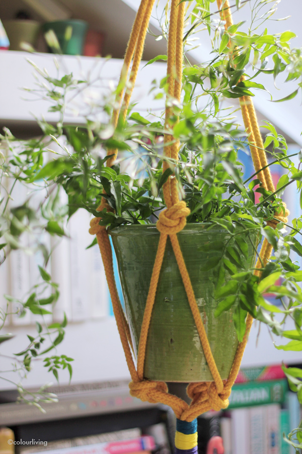 urban jungle bloggers - hanging planters - colourliving