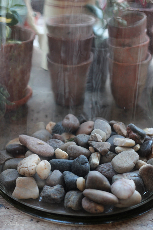 urban jungle bloggers - diy terrarium - colourliving