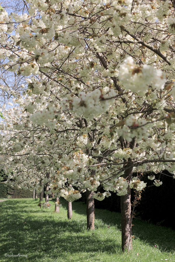 a stroll in regents park - colourliving