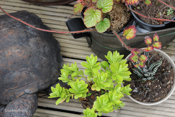 urban jungle bloggers - show your plant gang - colourliving