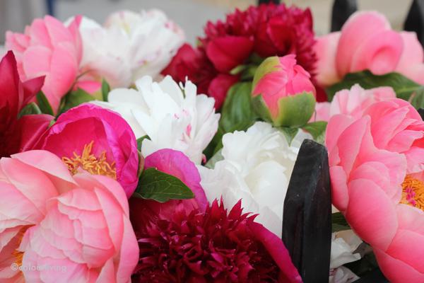 rhs chelsea flower show - colourliving
