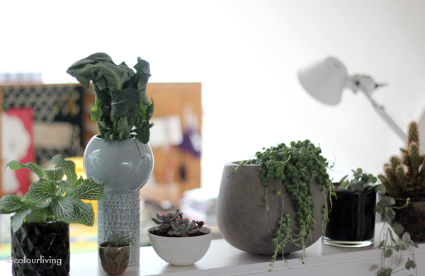 urbanjunglebloggers – plant shelfie 2